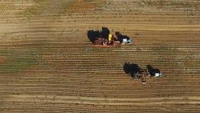 4K Flug über dem Ernten von Kartoffeln mit modernen Kartoffelroderanhängern und -traktoren Von der Luftdraufsicht stock video footage