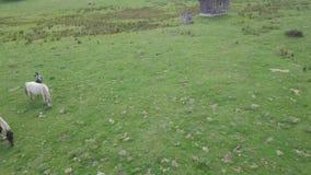 4k flyby κεραία των άγριων αλόγων που βόσκουν στις πράσινες ορεινές περιοχές, από μια καλύβα και ένα δάσος φιλμ μικρού μήκους