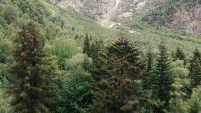 4k - flyg av helikoptern över blasten av granträd i de Kaukasus bergen stock video