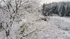 4K Flyg och start ovanför träd och den lösa slingriga floden i djupfryst skog på solnedgången Snowly vinter på norden flyg- sikt stock video