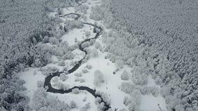 4K Flyg ovanför den lösa slingriga floden i djupfryst skog på dimmigt väder Flyg- panoramautsikt av den härliga vinterdalen stock video