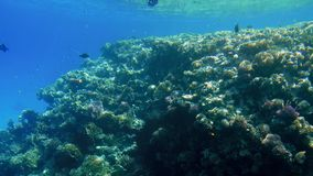 4k footage of beautiful ccolorful coral reef in the red sea. Amazing underwater life. 4k video of beautiful ccolorful coral reef in the red sea. Amazing stock footage