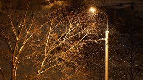 4K footage, snow is falling over light post and tree at winter night. In the city stock footage