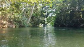 4K footage view from boat trip along the river with tropical rain forest side view.  stock video
