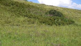 4k footage yellow-green hill and sky with clouds. Wild grasses. stock footage