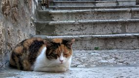4K Gato en una de las escaleras de la ciudad vieja de Dubrovnik, Croacia metrajes