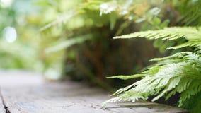 4K grüner Farn lässt Einfluss vom Wind mit grünem Baumhintergrund und bokeh Licht grüner natürlicher Hintergrund mit Kopienraumge stock video