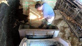 4K, granjero de lechería que conduce el tractor en establo moderno Trabajo campesino en granja metrajes