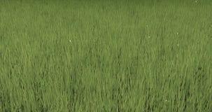 4k grass in wind,natural scenery, dandelion floating in the mid air. 4k grass in wind,natural scenery, dandelion floating in the mid air stock video
