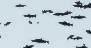 4k a group of black fish swimming,3d cartoon,animal silhouette. Cg_02934_4k stock video
