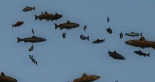 4k a group of black fish swimming,3d cartoon,animal silhouette. Cg_02933_4k stock footage