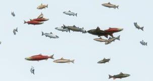 4k a group of fish swimming,3d cartoon,animal. Cg_02932_4k stock footage