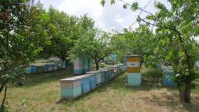 4K het algemene plan van de bijenkorven in weide stock videobeelden