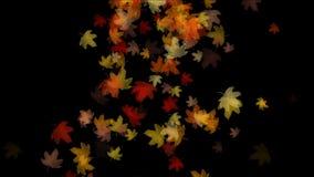 4k het verlof falling&flare licht van het esdoornblad, het romantische artistieke deeltje van de de herfstdaling stock videobeelden
