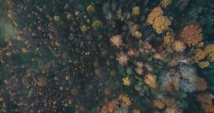 4K hoogste mening die en omhoog boven lucht de herfstbos roteren opheffen stock videobeelden