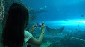 4k, imágenes de la mujer con smartphone un submarino gigante del rayo de manta en el acuario metrajes