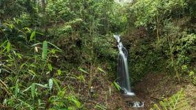 4K Jungle rainforest waterfall on a tropical Bali island, Indonesia. Green scene in rainforest. stock video footage