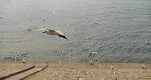 4k kierdel seagulls lata nad oceanem i brzeg w dniu zbiory wideo