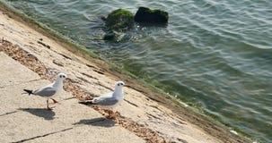 4k kierdel seagulls lata nad oceanem i wyrzucać na brzeg w dniu, QingDao porcelana zbiory wideo