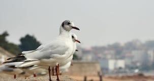 4k kierdel seagulls lata nad oceanem, Umieszczającym na brzeg zdjęcie wideo