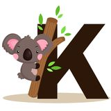 K for Koala vector illustration