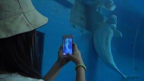 4k kobieta bierze fotografię z smartphone bieługi biali wieloryby w akwarium zbiory wideo