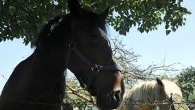 4 k konia odpoczywa przy zielenieją pole przy Asturias wioską przy sunlighted dniem zdjęcie wideo
