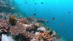 4k koraalrif met gezonde harde koralen en overvloedsvissen Royalty-vrije Stock Afbeeldingen