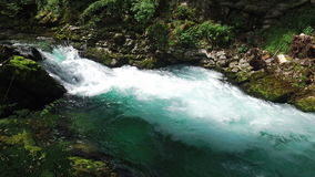 4K La rivière sauvage de Radovna entre dans la gorge de Vintgar Nettoyez l'eau bleue et le parc national de Triglav de forêt vert clips vidéos
