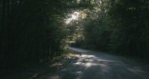 4K - Langsame Bewegung durch eine Waldasphaltstraße, die durch das Sonne ` s belichtet wird, strahlt aus stock footage
