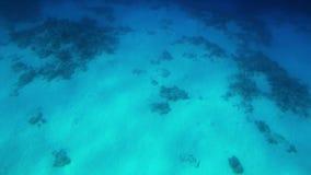 4k langzame motie onderwatervideo van het zwemmen over dode koralen op de zeebedding stock videobeelden