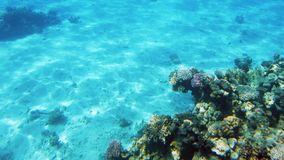4k lengte van mooi ccolorful koraalrif in het rode overzees Het verbazende onderwaterleven stock footage