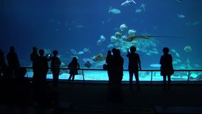 4k, les gens prennent des photos des poissons, requins, raies de manta sous-marins dans l'oceanarium banque de vidéos