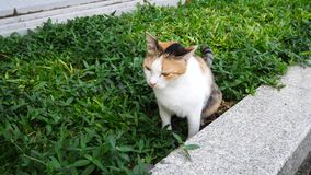 4K life of local cat in park it do something. stock footage