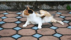 4K life of local cat in park it do something stock video footage