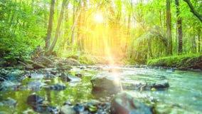 4K - Lissez dépister le tir de la rivière calme traversant une forêt tropicale verte silencieuse et rurale clips vidéos