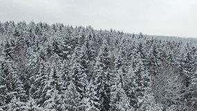 4K. Low flight above winter forest at snowfall on the north, aerial panoramic view stock video