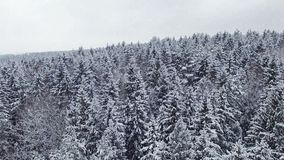 4K. Low flight above winter forest at snowfall on the north, aerial panoramic view stock footage