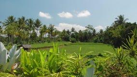 4K luchtmening van mooi tropisch landschap Het eiland van Bali stock video