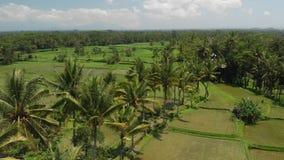 4K luchtmening van mooi tropisch landschap Het eiland van Bali stock footage