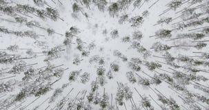 4k luchtmening Vlucht boven de winterbos op het noorden stock footage