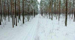 4k luchtmening Vlucht in de winterbos op het noorden stock videobeelden