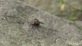 4K, macro primo piano di una mosca in una roccia del giardino in Daan Forest Park Taipei archivi video