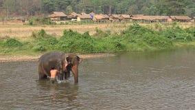 4K Mahout人洗涤物和沐浴他的大象在泰国的河 股票录像
