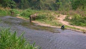 4K Mahout κάθονται στην όχθη ποταμού ενώ ο ασιατικός ελέφαντας τρώει τη χλόη στο δάσος απόθεμα βίντεο