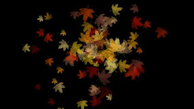 4k Maple leaf leave falling&flare light,autumn fall romantic particle artistic. stock video