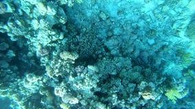 4k - mooi onderwaterschot met zonlichtzonnestralen op de oppervlakte van water stock videobeelden