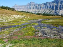 4k Rocky Mountain stream geological formation with flowers in the summer. 4k Mountain glacier park green valley stream from glacier with flowers Stock Images