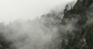 4k mountain mist rising in the morning,fog trees,Bomi County,tibet. 4k mountain mist rising in the morning,fog pine trees,such as wonderland.Bomi County in stock video footage
