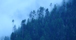 4k  mountain mist rising in the morning,fog trees,Bomi County,tibet. 4k mountain mist rising in the morning,fog pine trees,such as wonderland.Bomi County in stock footage